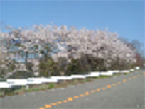 taiyo2002
